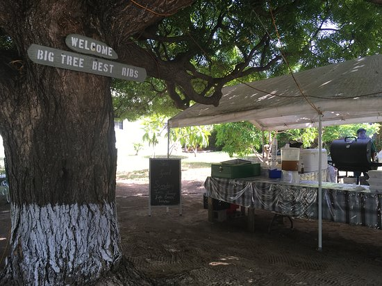 Gun Bay, Grand Cayman: Tress base and tent