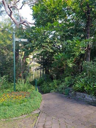 Sutherland Shire, Australia: E G Waterhouse National Camellia Gardens