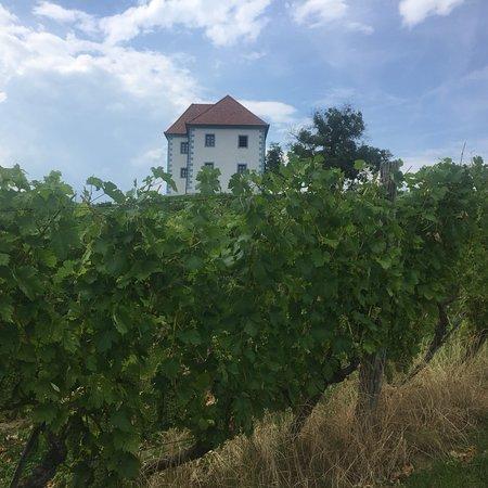 Slovenske Konjice, Slovenia: photo5.jpg