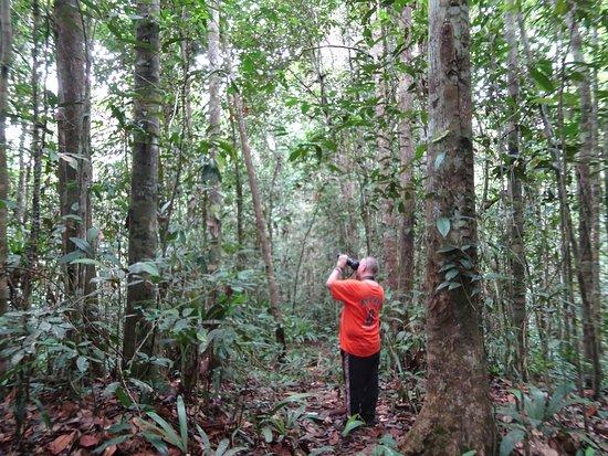Cendrawasih Expedition: birdwatching