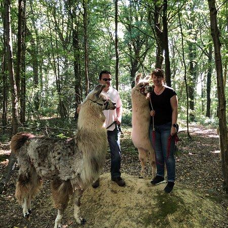 Kilcot, UK: Briery Hill Llamas