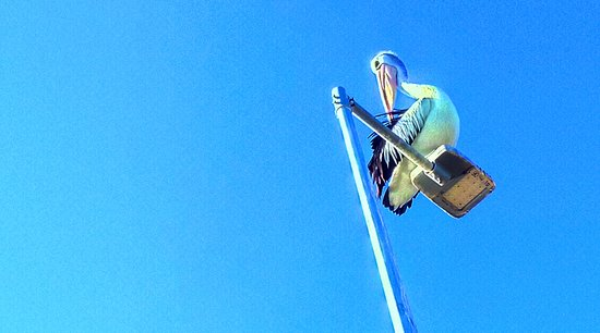 Applecross, Australien: There is a special place in Perth where Pelican Rea lESTATE is way above your head..