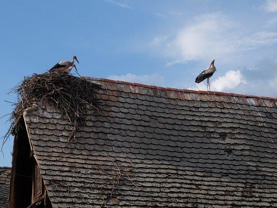 Kutina, Croacia: Cigoc, village des cigognes