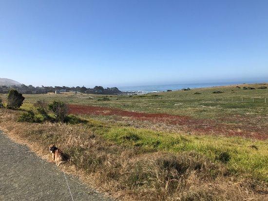 Marine Terrace Trail