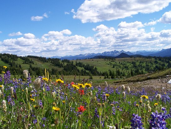 Manning Park, แคนาดา: Sub-alpine wildflower meadows