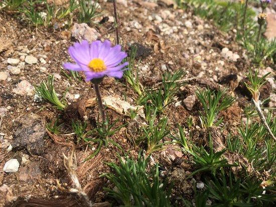 Fleur Mauve Photo De Jardin D Altitude Du Haut Chitelet Xonrupt