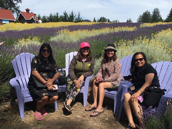 Purple Haze Lavender Farm 이미지