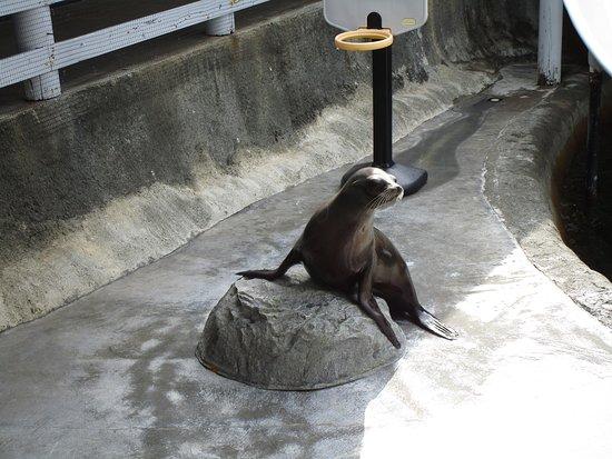 Ocean World: Sea Lion performance
