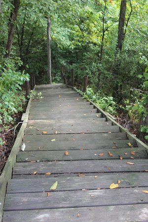 Glenwood, AR: Stairs leading down to the river