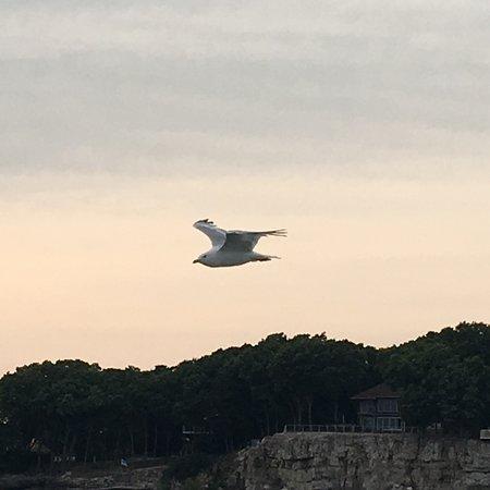 South Bass Island: photo0.jpg