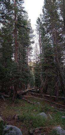 Bear Valley, Kalifornien: 20180725_203622_large.jpg