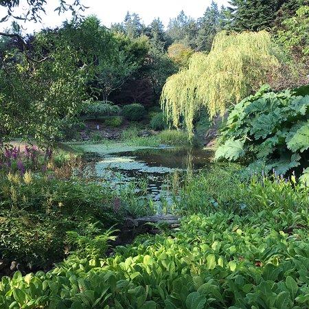 Japanese Garden: photo2.jpg