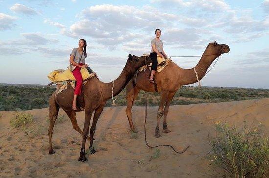 Kamelsafari in der Osianischen Wüste...