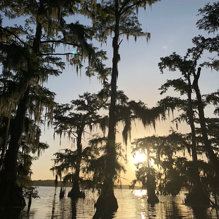Swamp Tours of Acadiana: photo0.jpg