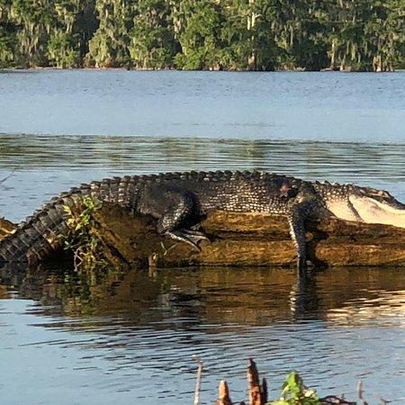 Swamp Tours of Acadiana: photo4.jpg