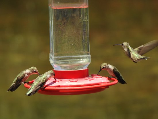 Delightful Rio Grande Nature Center State Park: Typical Action When The Feeder Is  Filled