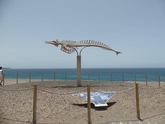 El Cotillo Beach & Lagoons Photo