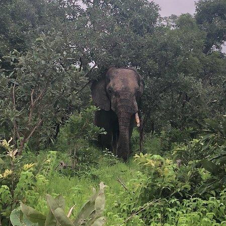 Mole National Park, Ghana: photo1.jpg