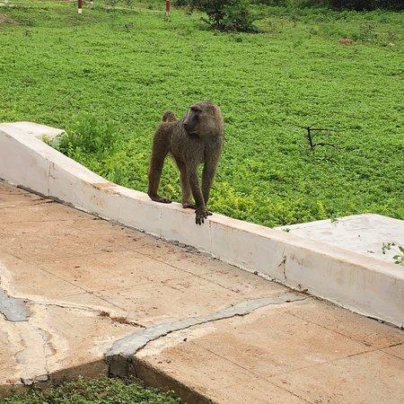 Mole National Park, Ghana: photo2.jpg