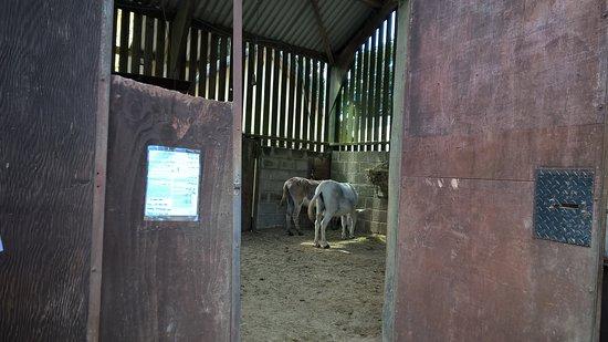 Gunnislake, UK: Donkey barn to visit