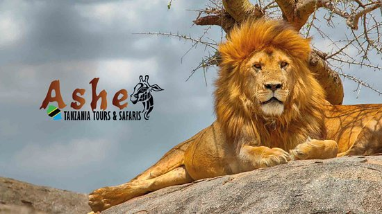 Ashe Tanzania Tours & Safaris