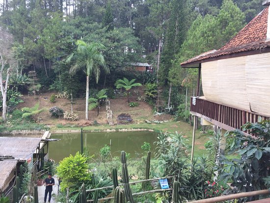 Kopi Luwak Sawarga