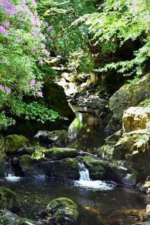 Tollymore Forest Park: FB_IMG_1533039461283_large.jpg