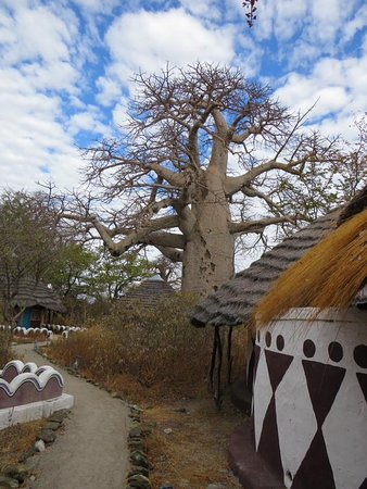 Awesome baobabs
