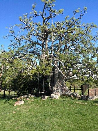 Estancia Guardia del Monte: Omues Baum