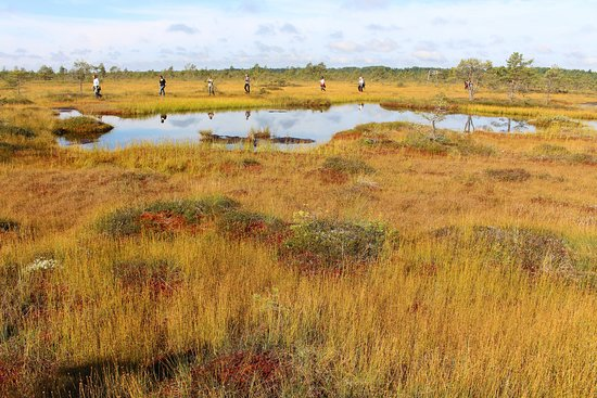 Private Tours Lithuania: Varnikai Path in the Swamp