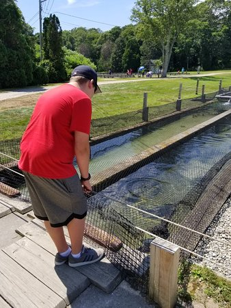 Sandwich Fish Hatchery - 2019 All You Need to Know BEFORE