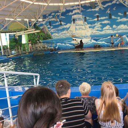 Дельфинарий Нижний Новгород