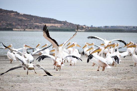 Elands Bay, Νότια Αφρική: Pelicans dancing on the Vlei