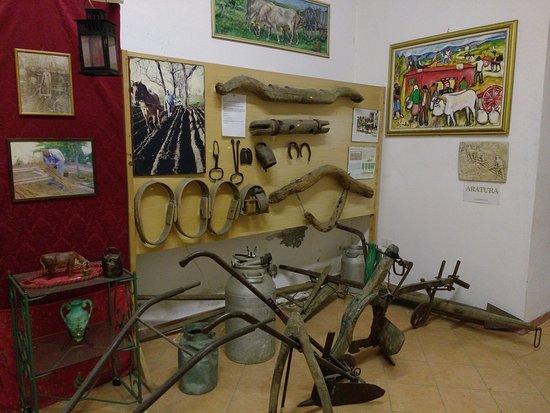 Museo Masseria Luce