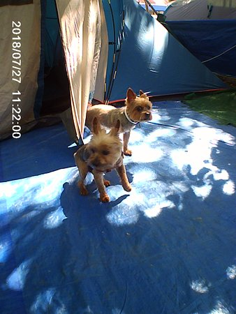 Camping Laguna Playa: Admiten a perretes en las parcelas.