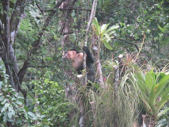 DoceLunas Hotel, Restaurant & Spa: Monkeys in the courtyard!