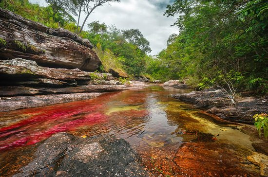 3-Day Tour to Caño Cristales from...