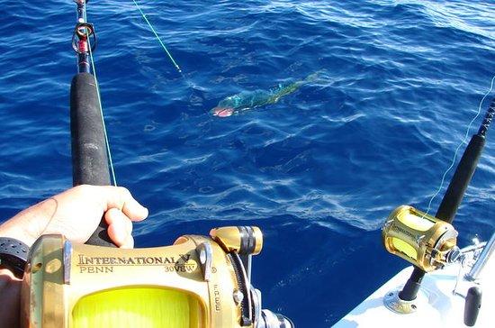 Big Game Fishing - Ganztägige...