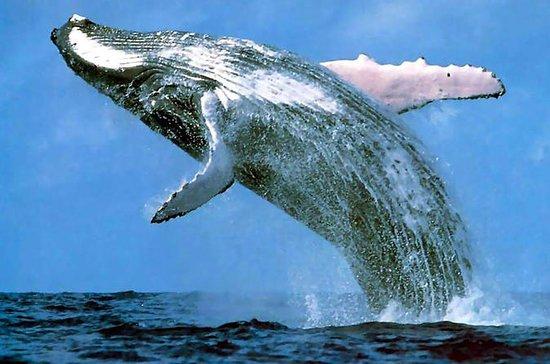Excursion d'observation des baleines...