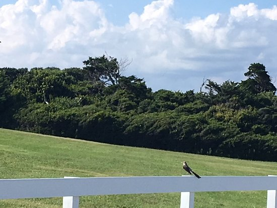 Fort Macon State Park: Long tail bird perched on a white fence.