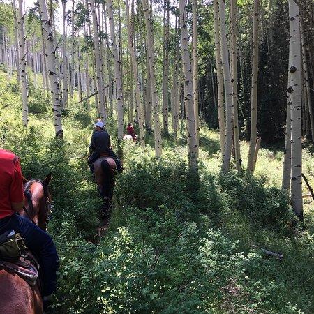 Amazing Trail Ride