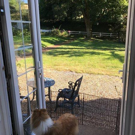 Dog Friendly Pleasant Stay