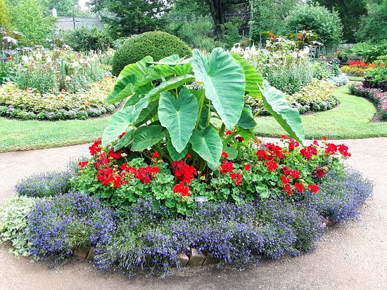 Elephant Ears Picture Of Annapolis Royal Historic Gardens