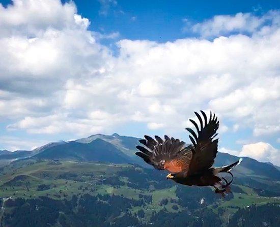 Adlerbuehne Ahorn: Wings wide open
