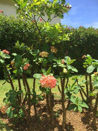 Residencial Casa Linda: Garden