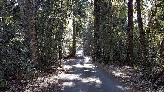 Scenic Rim, ออสเตรเลีย: Access road to Kamarun Lookout