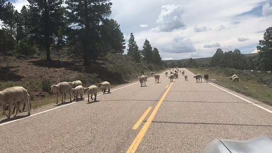 Road leading to Panguitch Lake Adventure- day - sheep- night pitch black