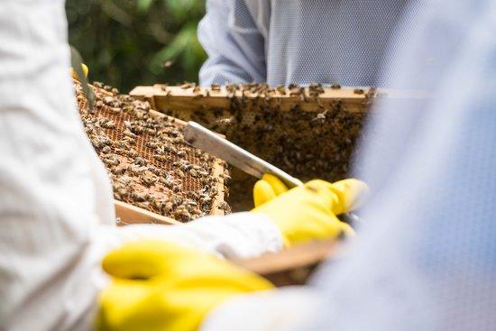 Cundinamarca Department, Colombia: Así de cerquita tendrás las abejas