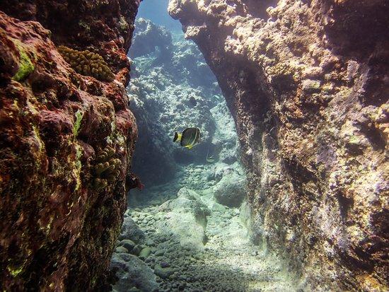 Mahana Dive: Canyon