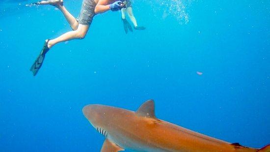 Snorkeling With A Sandusky Picture Of Florida Shark Diving Jupiter Tripadvisor